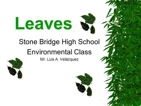 Leaves Stone Bridge High School Environmental Class Mr. Luis A. Velázquez.