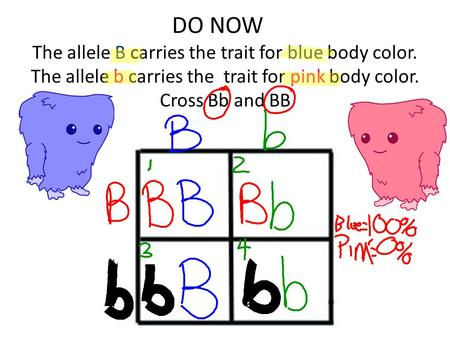 DO NOW The allele B carries the trait for blue body color. The allele b carries the trait for pink body color. Cross Bb and BB.