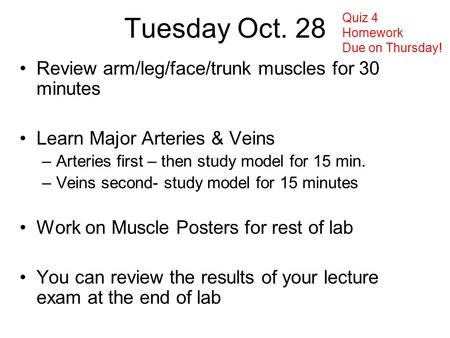 Tuesday Oct. 28 Review arm/leg/face/trunk muscles for 30 minutes