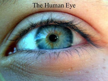 The Human Eye. The human eye is similar to a camera!! Light enters through an opening, is focused through a lens, passes through a light-tight (dark)