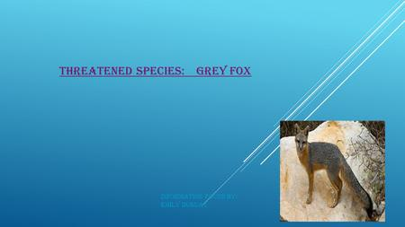 THREATENED SPECIES: GREY FOX Information found by: Emily Duguay.