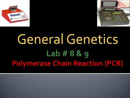 General Genetics. PCR 1.Introduce the students to the preparation of the PCR reaction. PCR 2.Examine the PCR products on agarose gel electrophoresis.