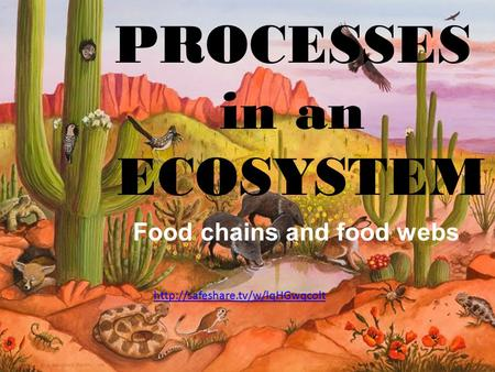 Processes in an Ecosystem PROCESSES in an ECOSYSTEM Food chains and food webs