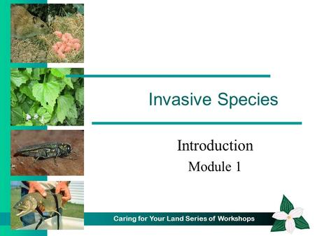 Caring for Your Land Series of Workshops Invasive Species Introduction Module 1.