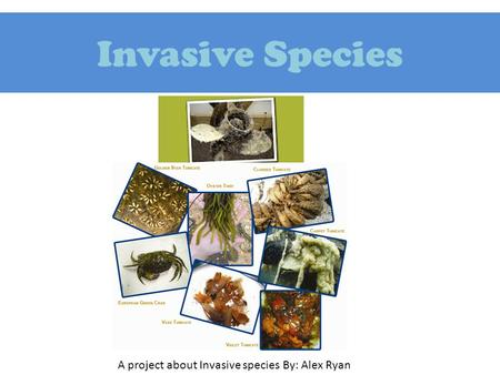 Invasive Species A project about Invasive species By: Alex Ryan.
