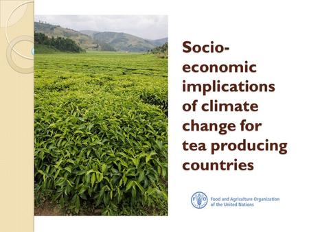 Socio- economic implications of climate change for tea producing countries.