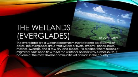 THE WETLANDS (EVERGLADES) BY JOHN CHIPP The everglades are a wetland ecosystem that stretches across 2 million acres. The everglades are a vast system.