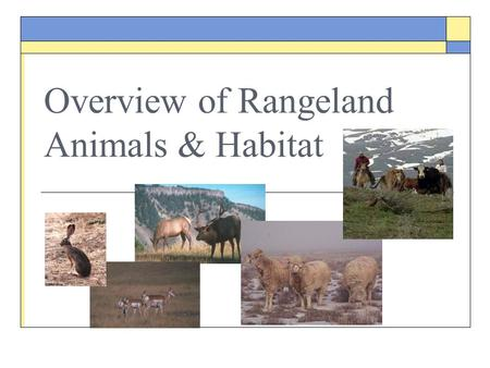 Overview of Rangeland Animals & Habitat. Objectives  Define habitat  Identify and discuss four basic elements of habitats  Identify and discuss limiting.