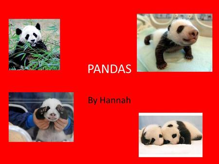 PANDAS By Hannah. Facts!! Scientists estimate that there are only about 2,000 pandas live in the wild and about 200 are in zoos and breeding stations.