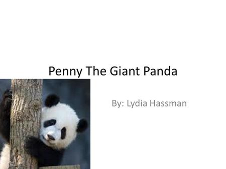 Penny The Giant Panda By: Lydia Hassman. There once was a young panda named Penny. She lived with her mom Pearl, her dad Preston, and her brother Poe.