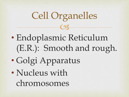  Endoplasmic Reticulum (E.R.): Smooth and rough. Golgi Apparatus Nucleus with chromosomes Cell Organelles.