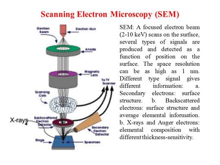Lecture 4 i scanning electron microscopy ppt download scanning electron microscopy sem ccuart Images