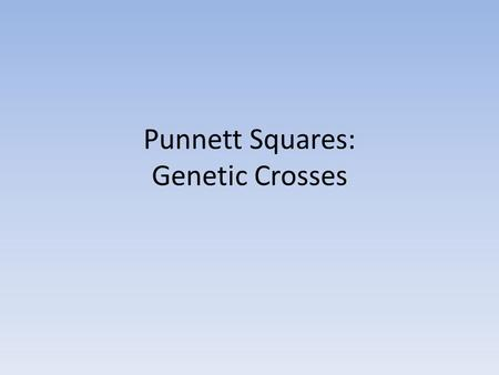 Punnett Squares: Genetic Crosses