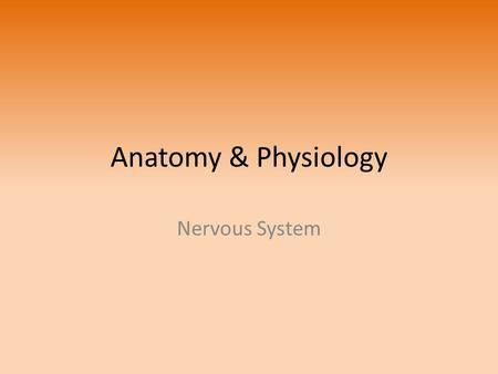 Anatomy & Physiology Nervous System.