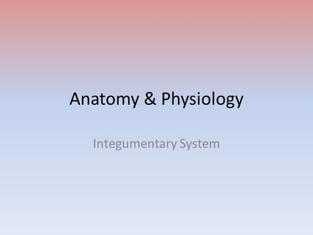 Anatomy & Physiology Integumentary System. Largest system in the body Largest organ in the body System includes skin, glands, blood vessels, nerves, hair,