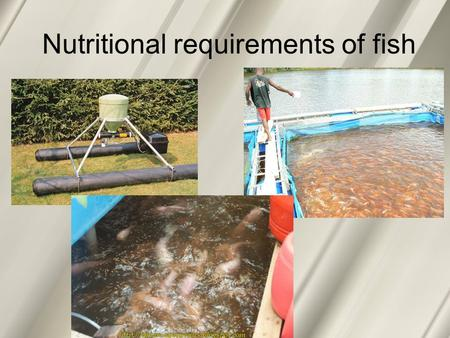 Nutritional requirements of fish