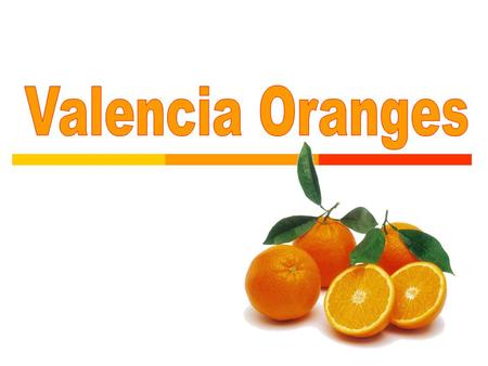  The Valencia orange is one of the sweet oranges used for juice extraction.  It is a late-season fruit, and therefore a popular variety when the navel.
