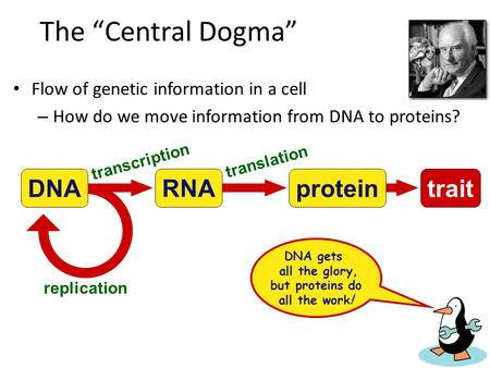 DNA gets all the glory, but proteins do all the work!