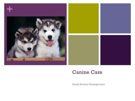 + Canine Care Small Animal Management. Vital Signs Common Diseases Vaccinations.