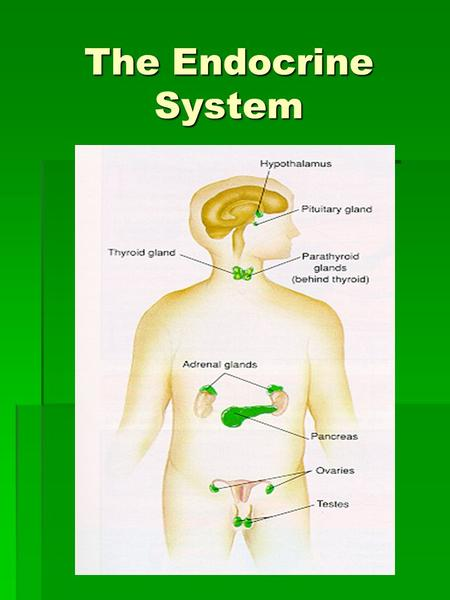 The Endocrine System. Functions of the Endocrine System  Controls the processes involved in movement and physiological equilibrium  Includes all tissues.