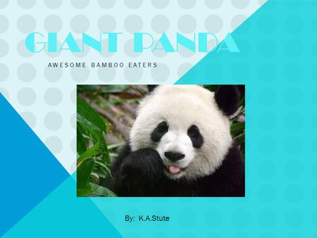 GIANT PANDA AWESOME BAMBOO EATERS By: K.A.Stute. INTRODUCTION WHAT IS PANDAS CALLED Scientific name is : Ursusmelanoleucas. Its real name is Panda. LIFESPAN.