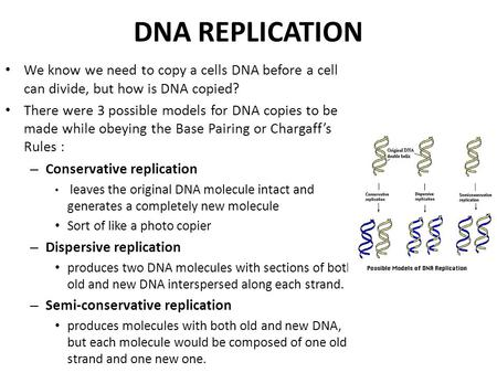 DNA REPLICATION We know we need to copy a cells DNA before a cell can divide, but how is DNA copied? There were 3 possible models for DNA copies to be.