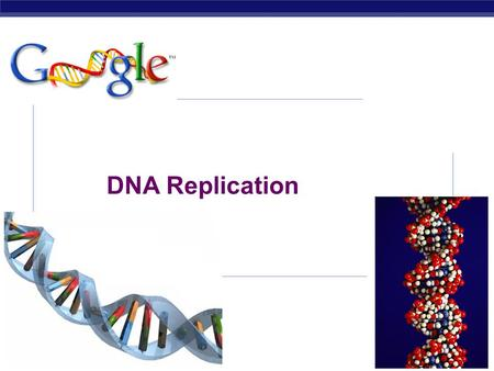 DNA Replication 2007-2008.