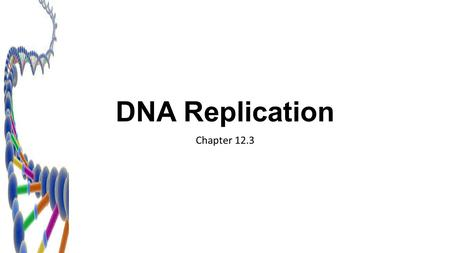 DNA Replication Chapter 12.3.