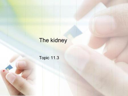 The kidney Topic 11.3.