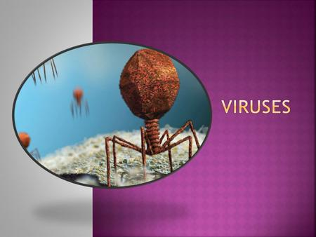  Virus = an infectious particle consisting of nucleic acid enclosed in a protein coat and, in some cases, a membranous envelope  NOT living (unable.