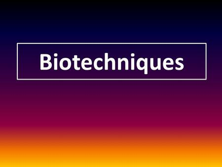 Biotechniques. Magnification DNA samples are often too small for effective study 2 methods of multiplying DNA samplePCR Cloning vectors.
