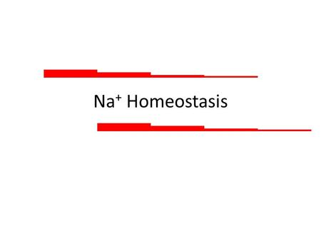 Na + Homeostasis. Sodium reabsorption by the nephron 1% 3% 6% 65% 25% Percentages give the proportion from filtered load reabsorbed Normally, only 1%
