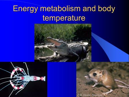 Energy metabolism and body temperature. Outline of the lecture Section 1 Energy Metabolism 1. Energy storage, liberation, transfer and utilization 2.