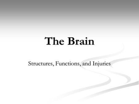 The Brain Structures, Functions, and Injuries. Older Brain Structures: Brainstem The Brainstem is the oldest part of the brain, beginning where the spinal.
