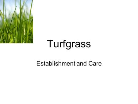 Turfgrass Establishment and Care. Turfgrass can be used for a variety of things Erosion Control Sports Lawns Pasture.