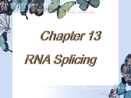 Outline  Introduction  The chemistry of RNA Splicing  The Splicing Machinery  Splicing Pathway  Alternative Splicing  Exon Shuffling  RNA Editing.