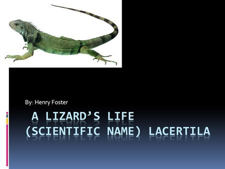 By: Henry Foster. A Lizard's Look Most lizards are green, but they can be tan, brown, black, blue, or even multi colored. All lizards have eyes on either.