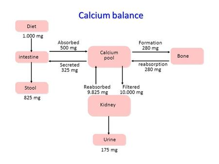 Diet intestine Stool Calcium pool Kidney Urine Bone 1.000 mg 825 mg Absorbed 500 mg Secreted 325 mg Formation 280 mg reabsorption 280 mg Reabsorbed 9.825.