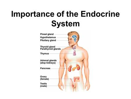Importance of the Endocrine System. Hormones Chemical regulators produced by cells that affect cells in another part of the body. Endocrine hormones are.