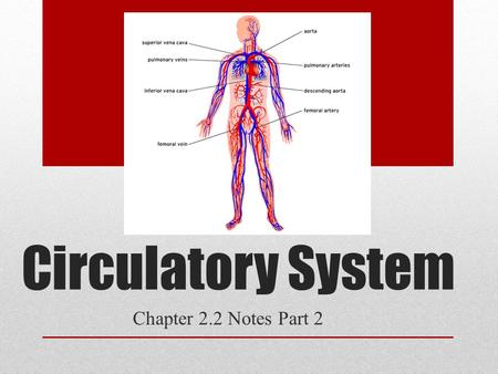 Circulatory System Chapter 2.2 Notes Part 2. Parts of the Heart Heart – left-right are reversed in diagrams (diagram p. 88) pumps 4L of blood/minute muscular.