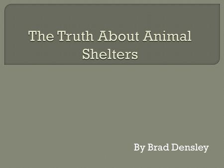 The Truth About Animal Shelters