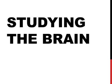 Studying The Brain.