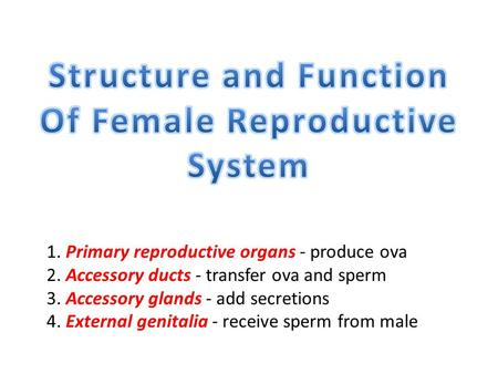1. Primary reproductive organs - produce ova 2. Accessory ducts - transfer ova and sperm 3. Accessory glands - add secretions 4. External genitalia - receive.