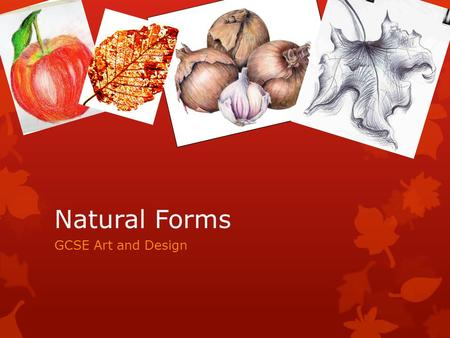 Natural Forms GCSE Art and Design.