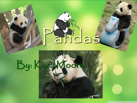 Pandas By: Kyra Moore Where do they live?  Pandas are found in the mountains of China  They live in cool, wet, cloudy bamboo forest.