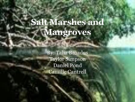Salt Marshes and Mangroves By: Talia Broadus Taylor Simpson Daniel Pond Camille Cantrell.