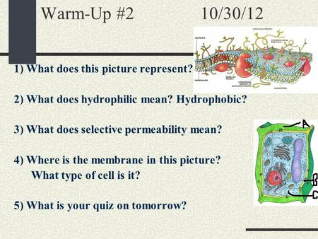 Warm-Up #2 10/30/12 1) What does this picture represent? 2) What does hydrophilic mean? Hydrophobic? 3) What does selective permeability mean? 4) Where.