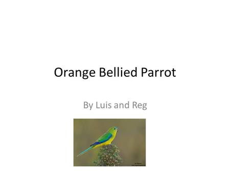 Orange Bellied Parrot By Luis and Reg. Classification The Orange bellied Parrot is a small endangered bird that lives in Australian forests.