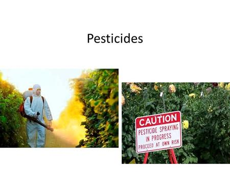 Pesticides. Pests are any species that interferes with human welfare by: – competing with us for food – invading lawns and gardens – destroying building.