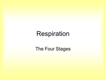 Respiration The Four Stages.